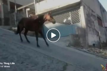 1 1 1  horse slides downhill