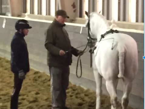 Mr. Schumacher working in-hand with a Lipizzan and it's handler.
