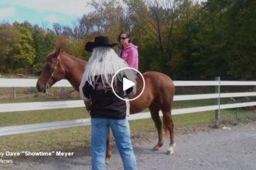 horse screamer natural horsemanship