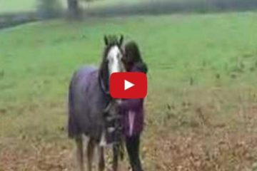 horse reunited with owner