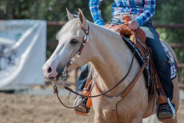 June Tabor Show Horses Facebook