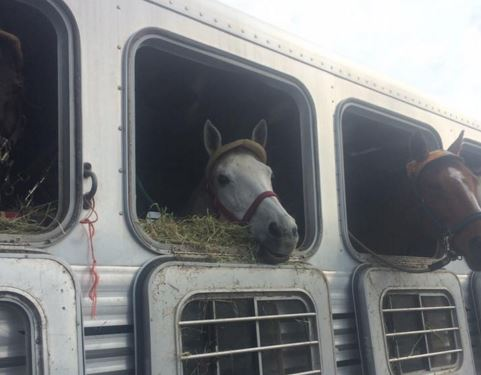 thoroughbred horse trailer