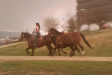 woman saves horses from fire