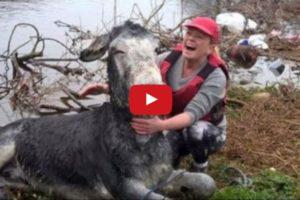 donkey smiles