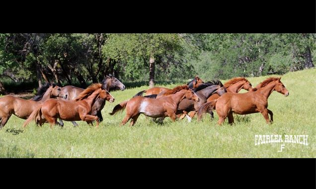 Picture From Fairlea Ranch Facebook Page