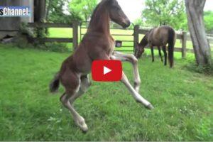 2 week foal