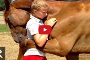 animals that saved peoples lives
