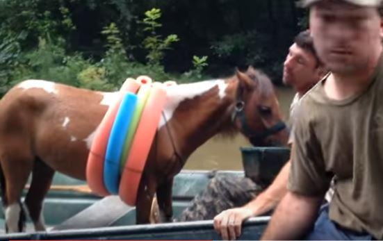 horse eats food on boat