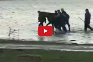 7-women-rescue-200-horses