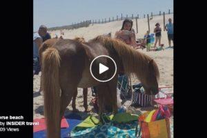 wild-horse-beach