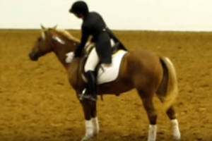 dressage-without-a-bridle-on-a-wild-mustang