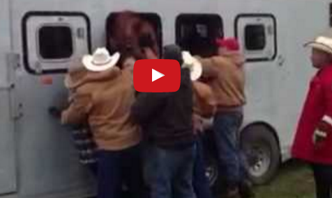 Horse Stuck In Trailer Window This Is Why You Shouldn T