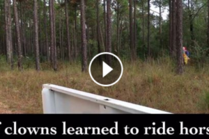 if-clowns-learned-to-ride-horses