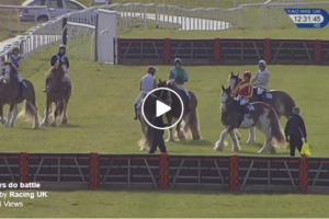 annual-clydesdale-races