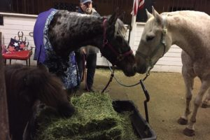 tracy-acres-blind-horses
