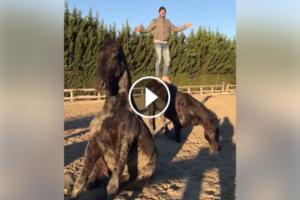 horse-mannequin-challenge