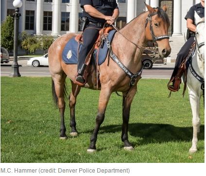 http://denver.cbslocal.com/2017/01/09/denver-officer-punished-after-unattended-patrol-horse-dies/
