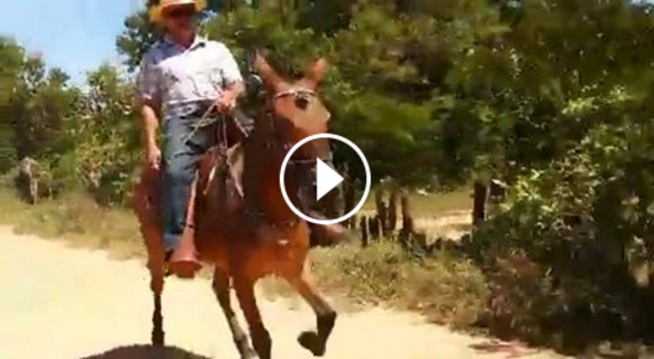 Mule With Gaits You've Never Seen