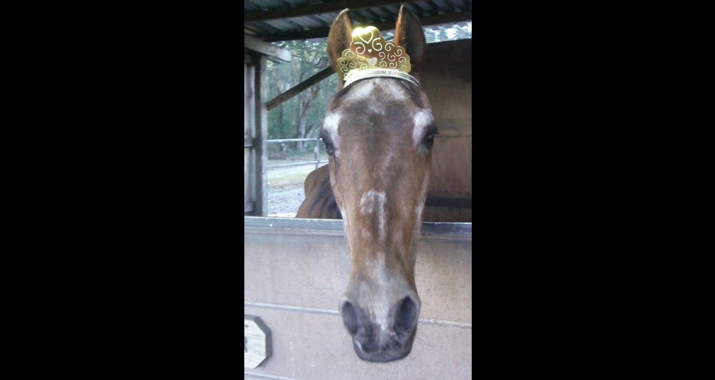 57 Year Old Horse Celebrates His Birthday In Style The Horseaholic