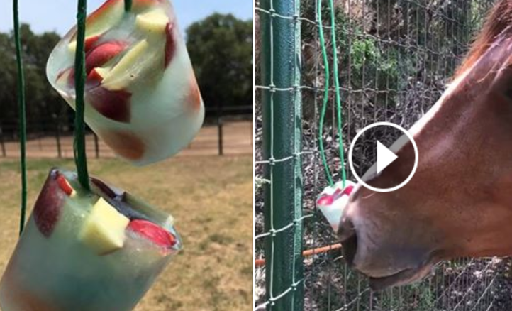 Easy Homemade Horse Popsicle S The Horseaholic