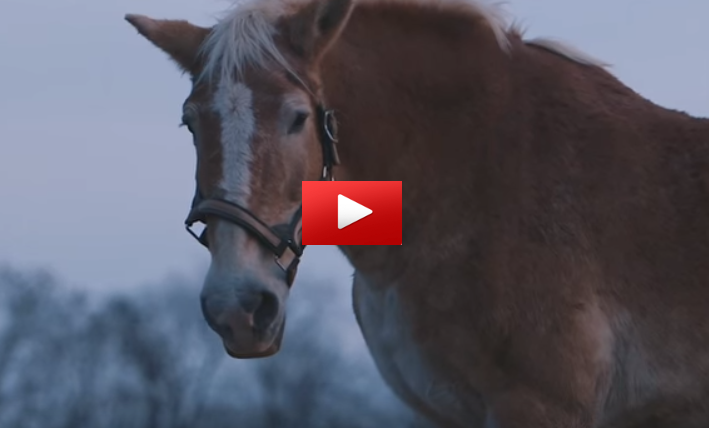 Gentle Giants Draft Horse Rescue  U2013 Giving Horses The Life
