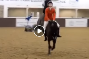 The Horseaholic For Horse Lovers Worldwide