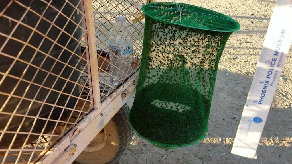 How To Use Your Sunshine Reusable Fly Trap – The Horseaholic